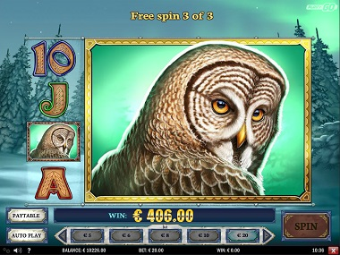Wild North Slot Owl